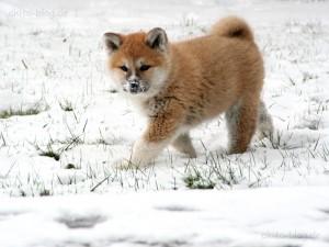 Chou im Schnee